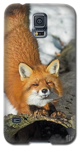 Galaxy S5 Case featuring the photograph Reynard The Fox by Nina Stavlund