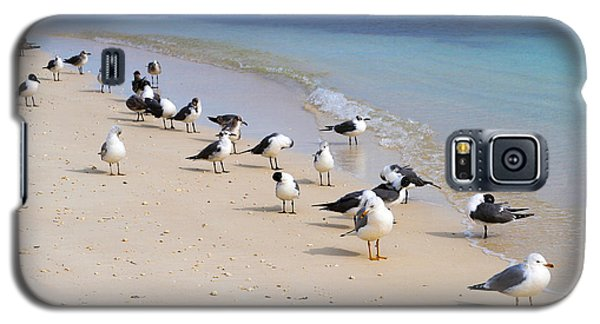 Rhapsody In Seabird Galaxy S5 Case