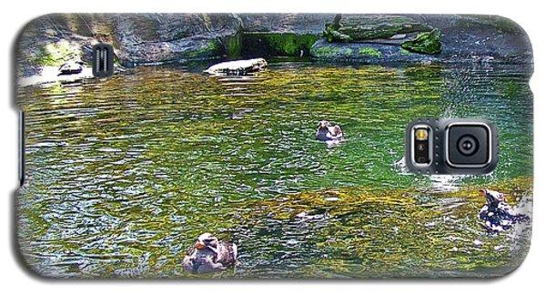 Rhinoceros Auklets In Oregon Coast Aquarium In Newport, Oregon Galaxy S5 Case