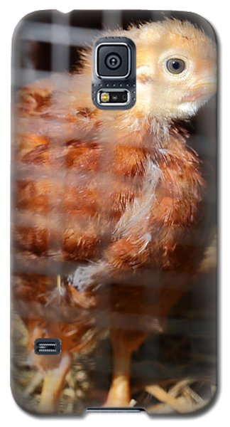 Rhode Island Red Chick At Five Weeks Galaxy S5 Case