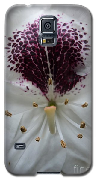 Rhododendron 2 Galaxy S5 Case