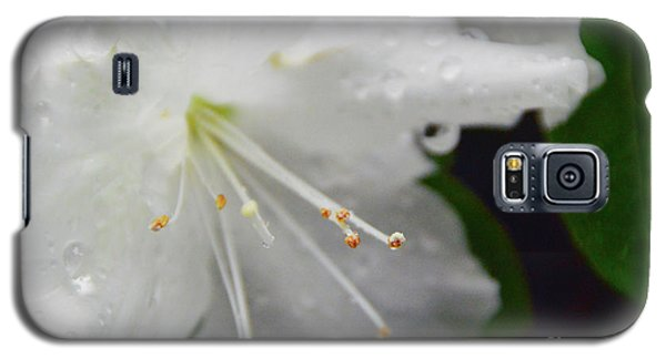 Rhododendron Blossom Galaxy S5 Case