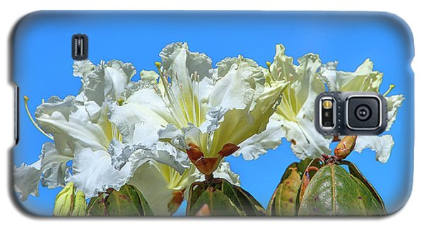 Rhododendron Ciliicalyx Dthn0213 Galaxy S5 Case