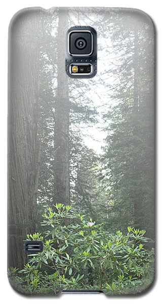 Rhododendrons In The Fog Galaxy S5 Case