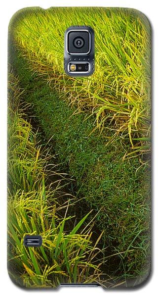 Rice Field Hiking Galaxy S5 Case