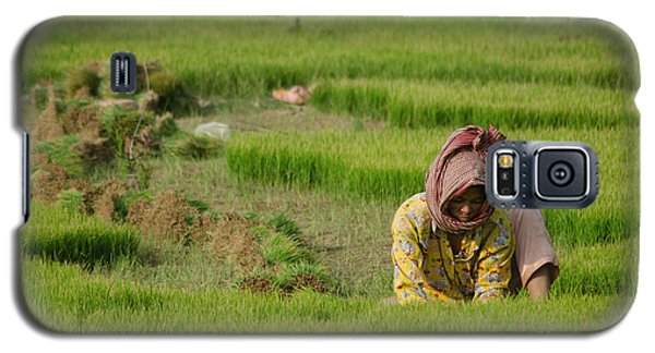 Rice Field Worker Harvests Rice In Green Field In Southeast Asia Galaxy S5 Case by Jason Rosette