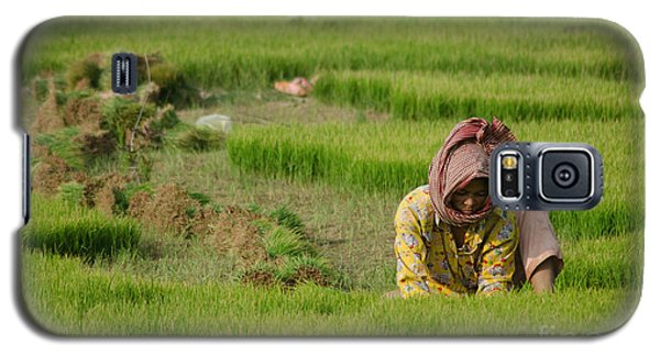 Rice Field Worker Harvests Rice In Green Field In Southeast Asia Galaxy S5 Case