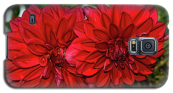 Galaxy S5 Case featuring the photograph Rich Red Dahlias By Kaye Menner by Kaye Menner