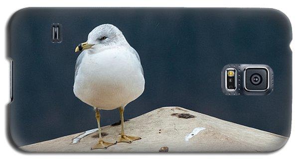 Ring Bill Galaxy S5 Case by Joe Scott
