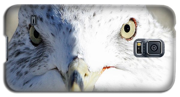 Ring Billed Gull Galaxy S5 Case