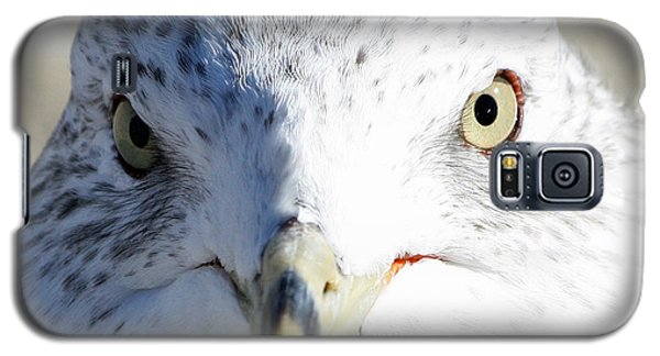 Ring Billed Gull Galaxy S5 Case