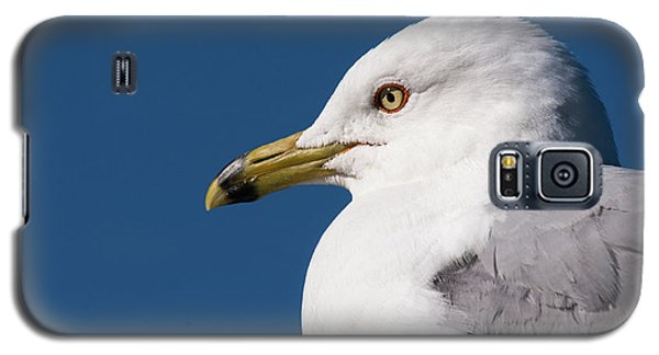 Ring-billed Gull Portrait Galaxy S5 Case