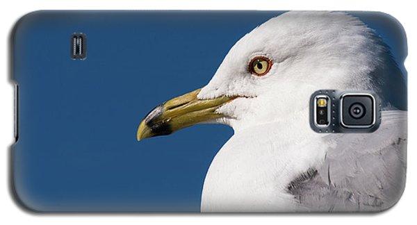 Ring-billed Gull Portrait Galaxy S5 Case