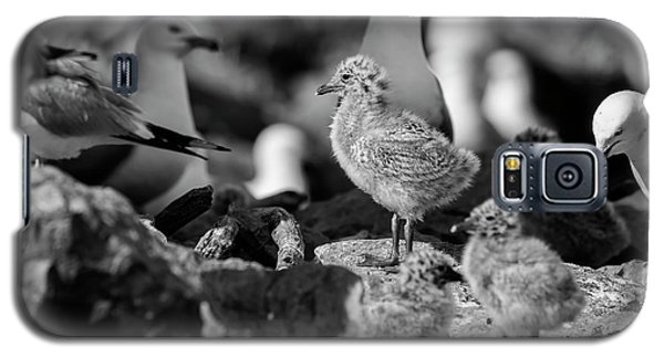 Galaxy S5 Case featuring the photograph Ring-billed Gulls 2016-1 by Thomas Young
