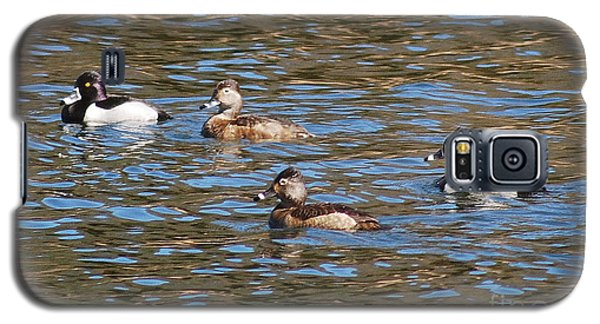 Ring Neck Ducks 20120314_d Galaxy S5 Case