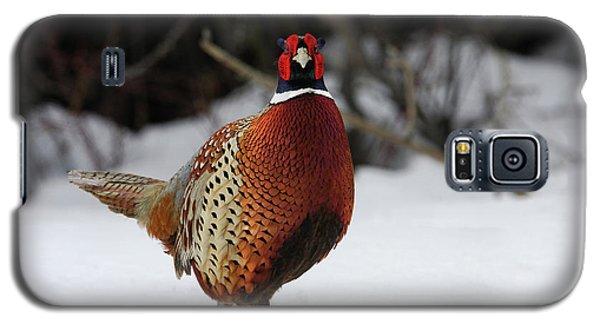 Ring Neck Pheasant Galaxy S5 Case