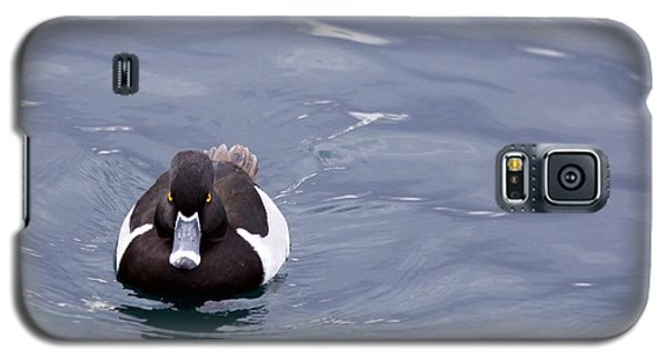Ring-necked Duck Galaxy S5 Case by Afrodita Ellerman