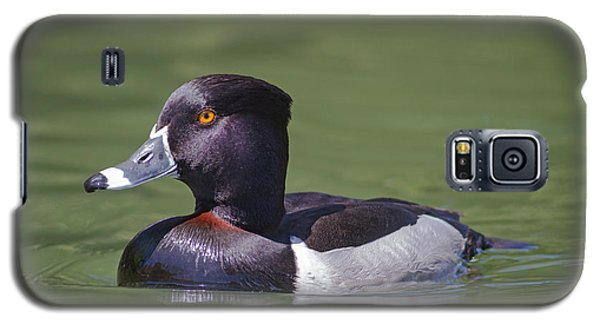 Ring-necked Duck Profile Galaxy S5 Case