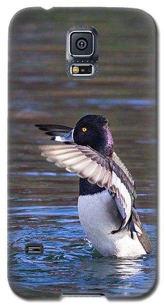 Ring-necked Duck Wings Up Galaxy S5 Case
