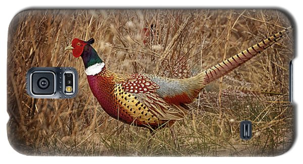 Ring Necked Pheasant Galaxy S5 Case