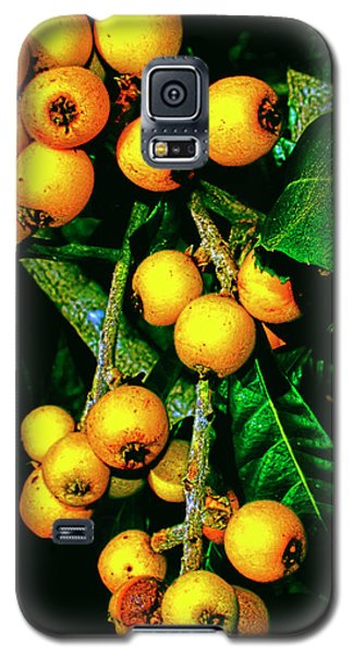 Ripe Loquats Galaxy S5 Case