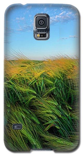 Ripening Barley Galaxy S5 Case