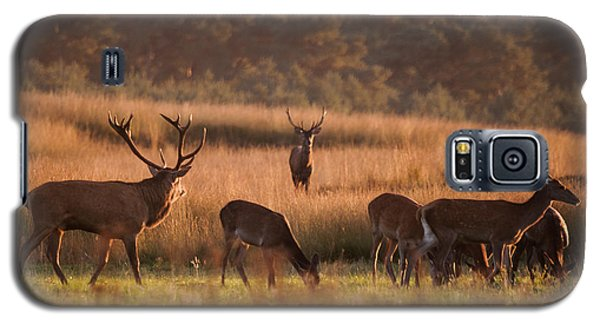 Magazine Cover Galaxy S5 Case - Rivals by Niklas Banowski Wildlifephoto