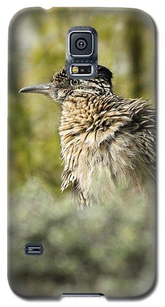 Roadrunner On Guard  Galaxy S5 Case by Saija  Lehtonen