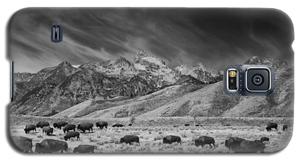 Roaming Bison In Black And White Galaxy S5 Case