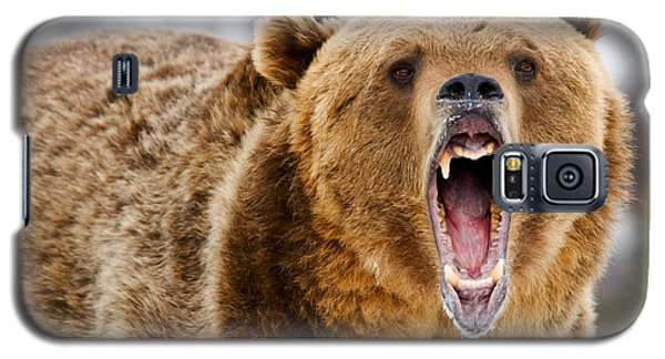 Roaring Grizzly Bear Galaxy S5 Case