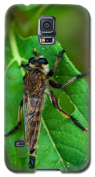 Robber Fly 1 Galaxy S5 Case