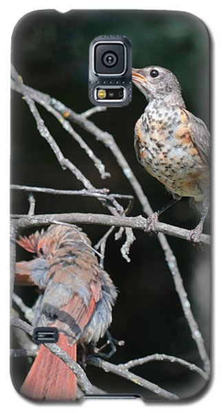 Robin And Cardinal 2664 Galaxy S5 Case