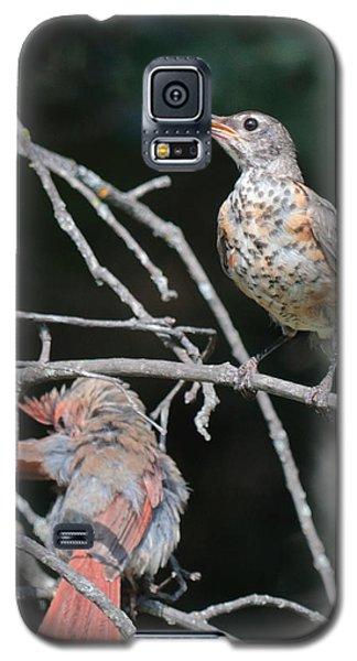 Robin And Cardinal 2664 Galaxy S5 Case