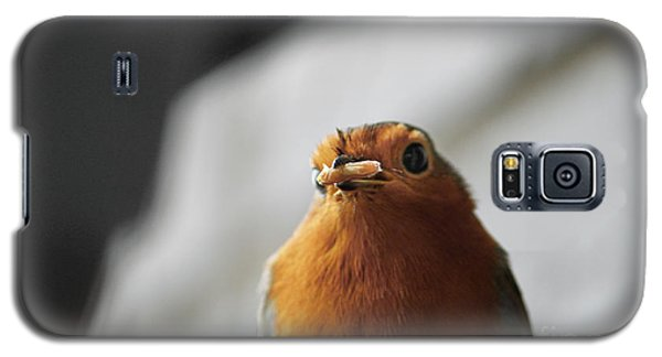 Robin Closeup Galaxy S5 Case