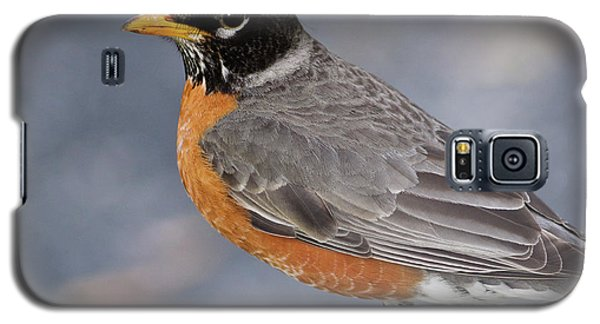 Galaxy S5 Case featuring the photograph Robin by Douglas Stucky