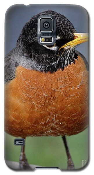 Galaxy S5 Case featuring the photograph Robin II by Douglas Stucky