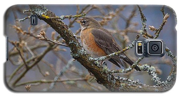 Robin In A Tree Galaxy S5 Case