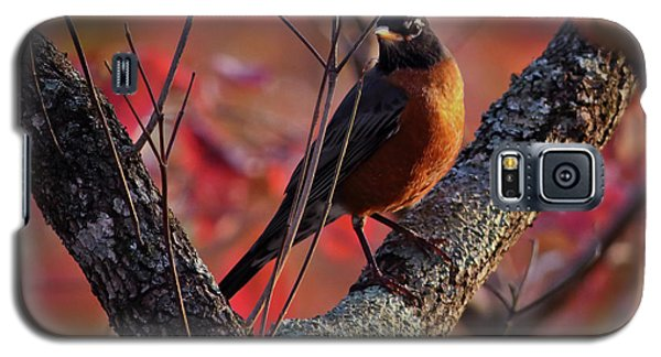 Galaxy S5 Case featuring the photograph Robin In The Dogwood by Douglas Stucky