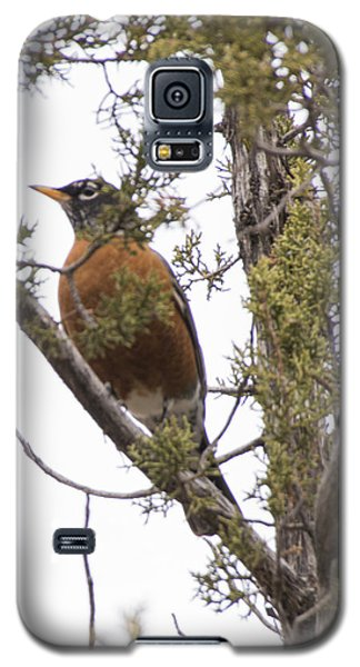Galaxy S5 Case featuring the photograph Robin On The Lookout by Laura Pratt