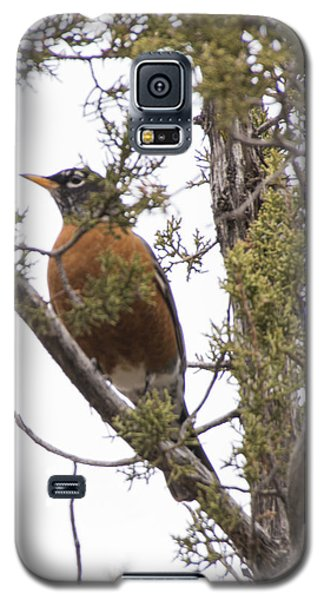 Robin On The Lookout Galaxy S5 Case
