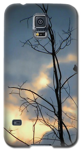 Galaxy S5 Case featuring the photograph Robin Watching Sunset After The Storm by Sandi OReilly