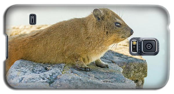 Rock Hyrax On Table Mountain Cape Town South Africa Galaxy S5 Case by Marek Poplawski