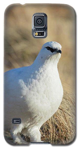Rock Ptarmigan Galaxy S5 Case