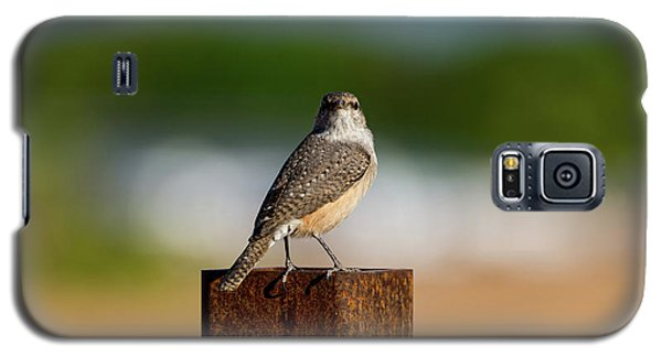 Rock Wren 1 Galaxy S5 Case