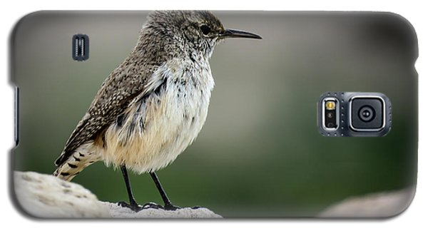 Rock Wren Galaxy S5 Case