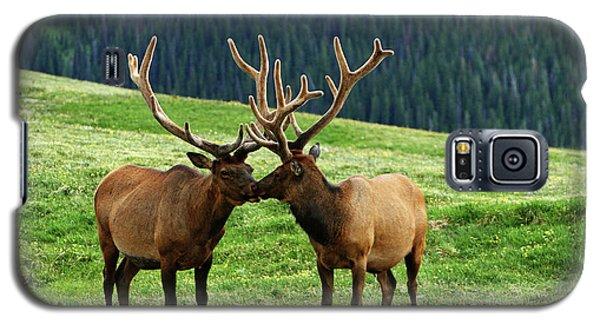 Rocky Mountain Elk 2 Galaxy S5 Case