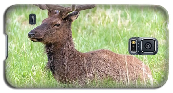 Rocky Mountain Elk In Velvet Galaxy S5 Case