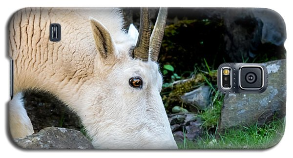 Rocky Mountain Goat Busy Eating Galaxy S5 Case