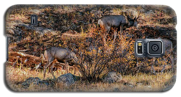 Rocky Mountain National Park Deer Colorado Galaxy S5 Case