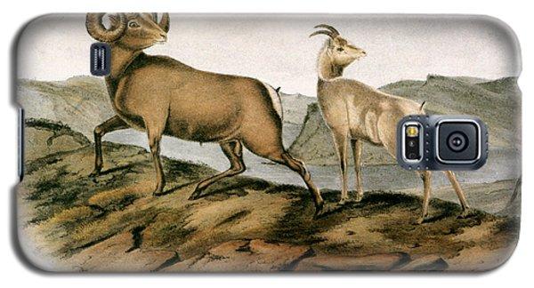 Audubon Galaxy S5 Case - Rocky Mountain Sheep, 1846 by Granger